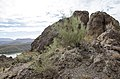 Butcher Jones Trail to Pinter's Point Loop, Tonto National Park, Saguaro Lake, Ft. McDowell, AZ - panoramio (1).jpg