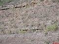 Cada linha significa uma era geológica - Serra de Santana(Serra de Rio Claro) - Rod. Washington Luiz SP-310 Km-193 - panoramio.jpg