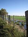 Camargue prairie inondée.jpg