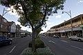 Camden NSW 2570, Australia - panoramio (23).jpg
