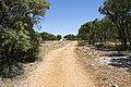 Camino - panoramio (32).jpg