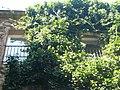 Casa de la Misericòrdia P1370996.jpg