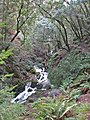 Cascading streams from winter rains make Cataract Creek a wet green dreamland. - panoramio.jpg