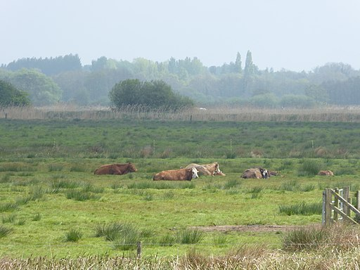 Castle Marshes 4
