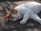 Cat-relaxed.jpg