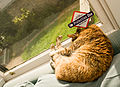Cat feet on the window (4074446504).jpg
