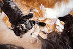 Cat mass 9074.jpg