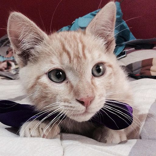 Cat with a purple bow. best cat instagram accounts