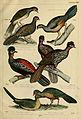 Central Atlas für zoologische Gärten (Taf. 271b) (6436438553).jpg