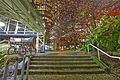 Cherry Blossoms @ Burrard Station (24980005413).jpg