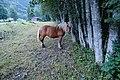 Cheval blond @ Val Montjoie @ Les Contamines-Montjoie (51033196027).jpg