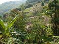 Chiang Rai Province P1110712.JPG