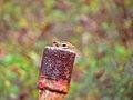 Chipmunk peeking out of a pipe (Unsplash).jpg