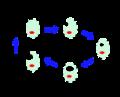 Chlamydophila psittaci .png