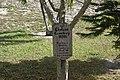 Cholera Cemetery in Hope Town.jpg