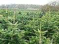 Christmas is coming ... - geograph.org.uk - 746160.jpg