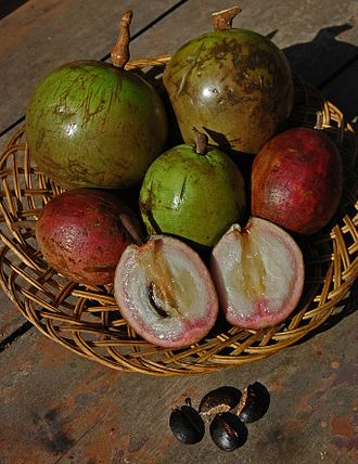 Chrysophyllum cainito - Fruits, usually purple, are also available in green or red