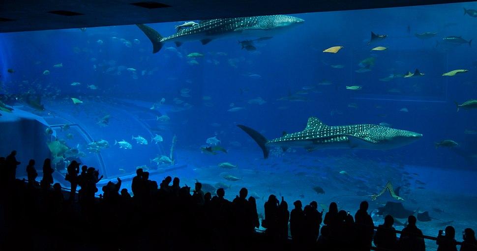 Churaumi Aquarium main tank 'Kuroshio Sea'
