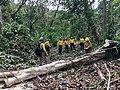 Clearing fallen trees (37055332426).jpg