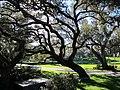 Clearwater,Florida,USA. - panoramio (44).jpg