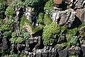 Clifftop Flora - geograph.org.uk - 820325.jpg
