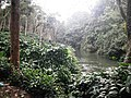Coffee Plantation @ Nelliampathy - panoramio.jpg