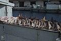 Conch, helmet conch, starfish. Nassasu stall (38869941021).jpg