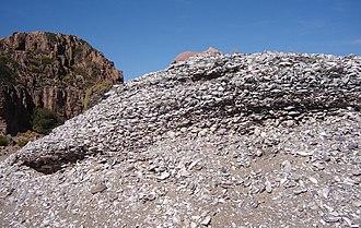 Midden - A closeup of a shell midden in Argentina.