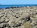 Concretions at hot water Beach 7.JPG
