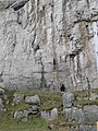 Contemplating the cliff, Great Orme - geograph.org.uk - 651136.jpg