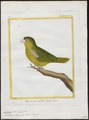 Conurus tiriacula - 1700-1880 - Print - Iconographia Zoologica - Special Collections University of Amsterdam - UBA01 IZ18500189.tif