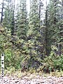 Copper Creek, Yukon-Charley Rivers, 2003 (32b1e4a5-0fc2-4d9a-b2a1-30e4c325b414).jpg