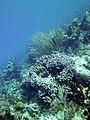 Coral Scene 14 (7342795444).jpg
