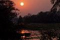 Cormorant at sunset.jpg