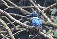 Costa Rica 40.DSCN4072-Mnew (30322670223).jpg