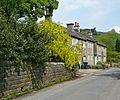 Cottages and laburnum (3685437162).jpg