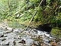 Cours d'eau et Biotope (5).jpg