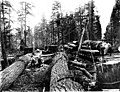 Crew loading a fir log onto a logging railroad using a ginpole and donkey engine, Washington, 1907 (KINSEY 2757).jpeg