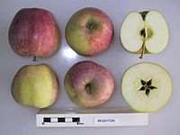 Cross section of Brighton, National Fruit Collection (acc. 1951-242).jpg