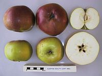 Cross section of Sleeping Beauty, National Fruit Collection (acc. 1947-485).jpg