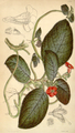 Curtis's Botanical Magazine, Plate 4312 (Volume 73, 1847).png