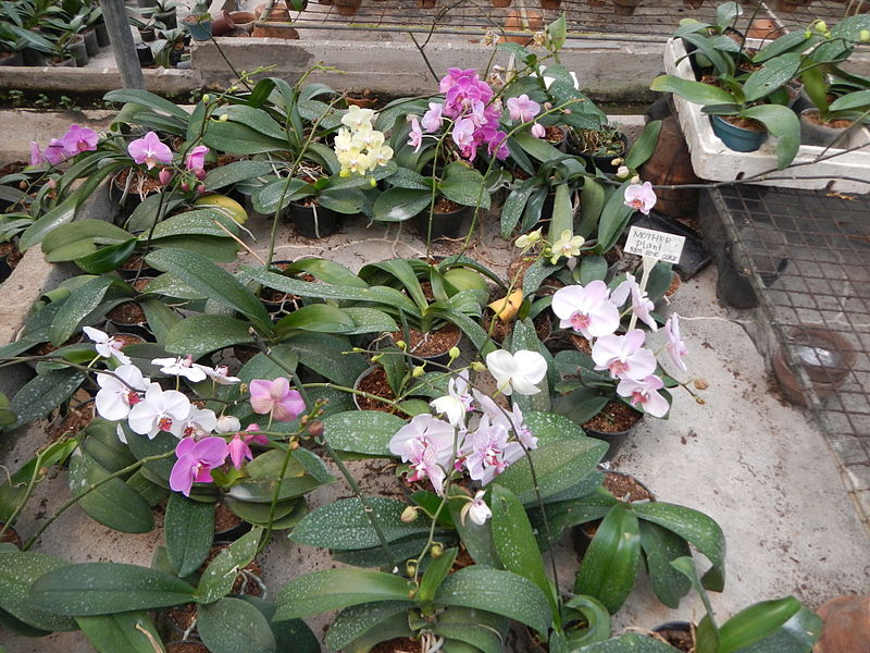 VS Orchidarium