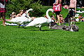 Cygnus olor - Zürich - Enge- Arboretum 2010-08-10 16-16-56.JPG