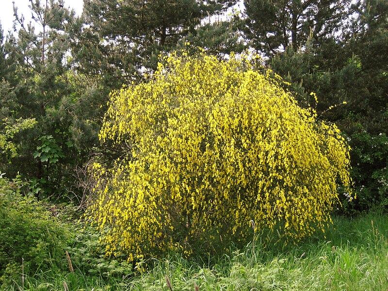 Actually, just a bush.