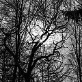 Dülmen, Wildpark, Bäume im Gegenlicht -- 2021 -- 7435 (bw).jpg