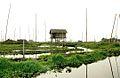 DSC01216 Burma Inlé Lake Floatting garden at Ywama (4641860535).jpg