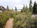 DSC02801, South Lake Tahoe, Nevada, USA (6725088777).jpg