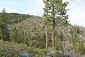 Davis Creek Park - panoramio (51).jpg