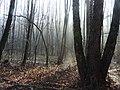 Decembrový les - panoramio.jpg