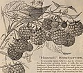 Descriptive catalogue of grape vines and small fruits (1886) (20252426564).jpg